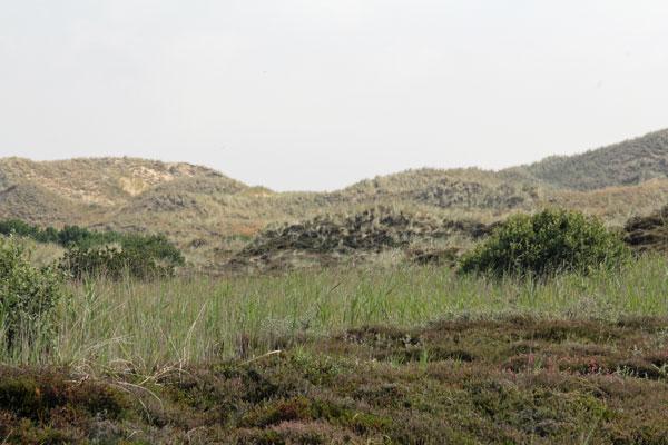 landskab_4_web