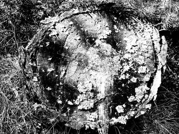 Skoven_16